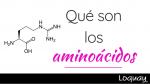 ¿Conoces que son los aminoácidos?